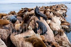 Sea lion (4).jpg