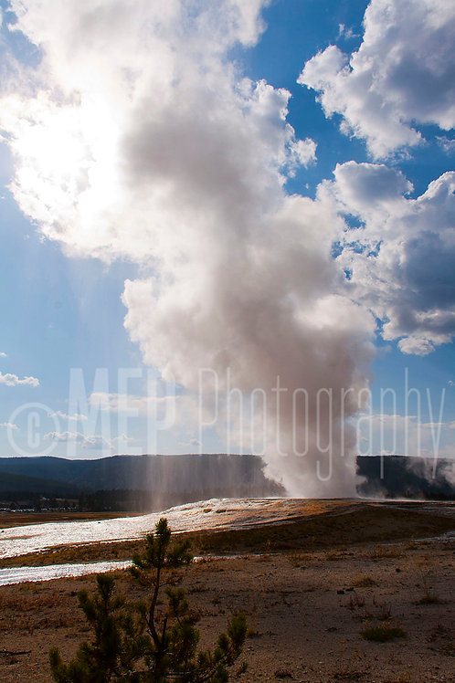 Yellowstone National Park (9)