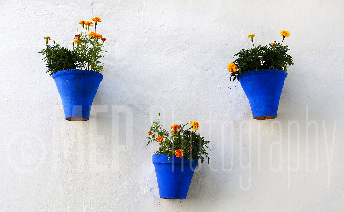 Flower (8).jpg
