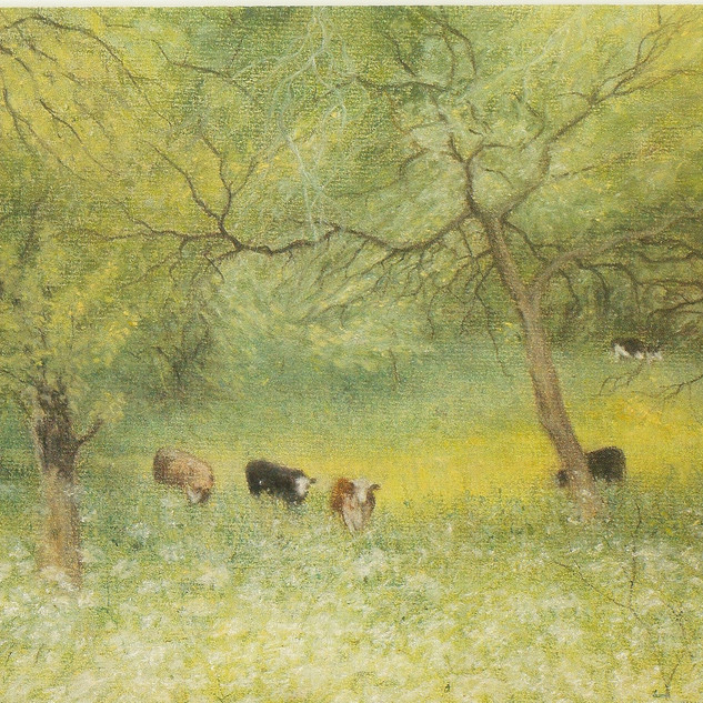 Cows amidst the orchard.