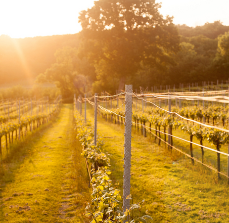 Part 3! Food & Beverage Academy: To the vineyard for one glass, or a few...