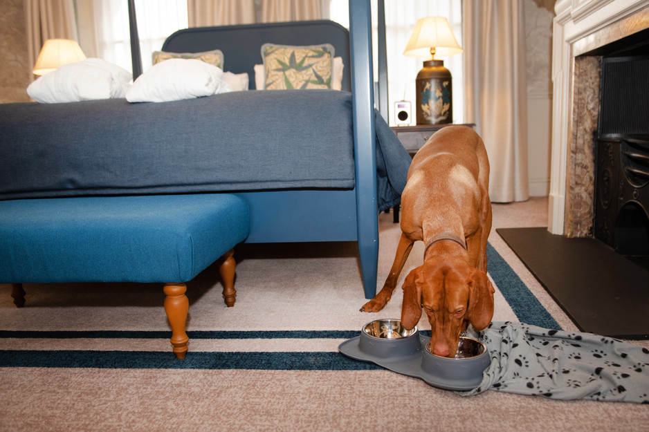 Top tips for a stay in beautiful Richmond with your dog...