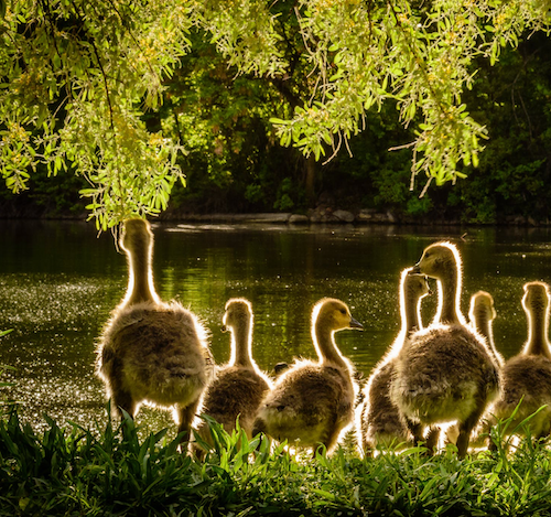 Fun family favourites: our recommendations for the perfect family getaway