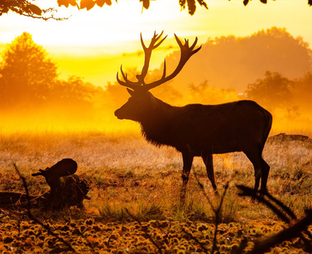 Explore more this Autumn: Our top 6 outdoor spots in Surrey's leafiest landscape