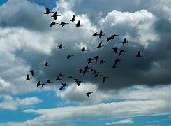 Fugle3.jpg