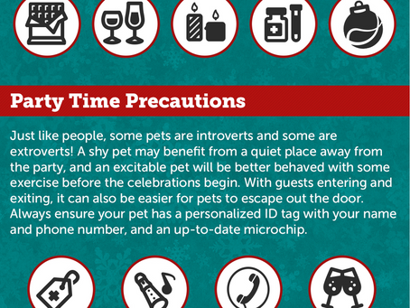 3 Tips for  A Happy, Safe Holiday with your Pets