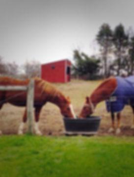 Hunterdon County Horse Sitting