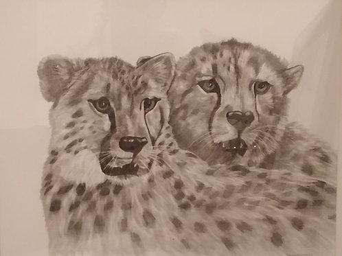 #142  Cheetahs  16x20 pencil drawing