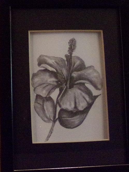 #11 flower 5x7 framed pencil drawing