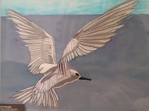 #62 Seagull  11x14 framed watercolor