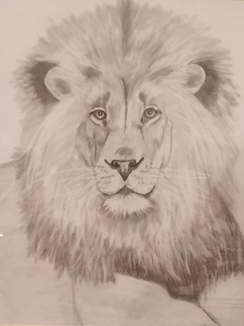 #30 Lion  16x20 pencil drawing