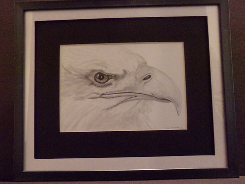 #159 Eagle profile 10x12 framed pencil drawing