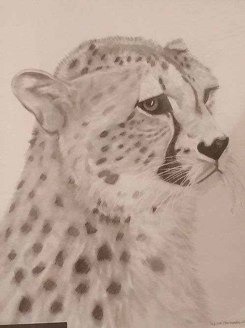 #160 Cheetah  11x14 framed pencil drawing