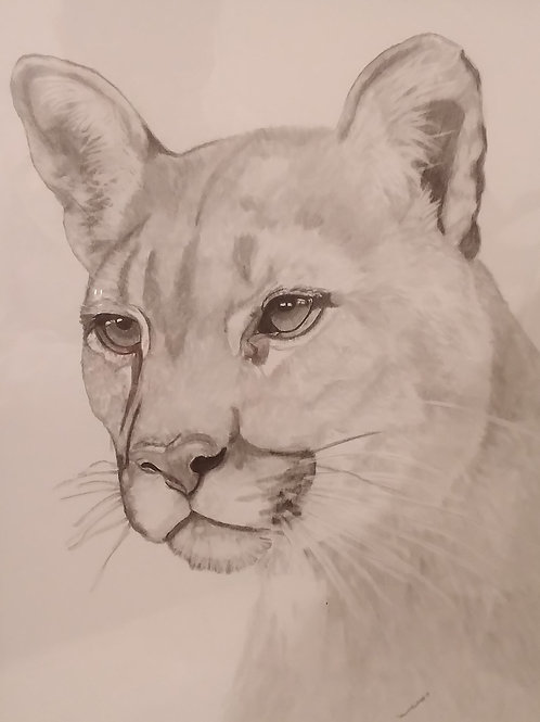 #26 Cougar  16x20  pencil drawing