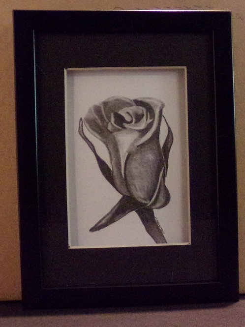 #8 rose 5x7 framed pencil drawing
