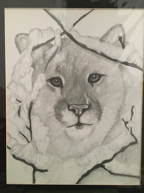 Cougar in snow #17 16x20 framed pencil drawing