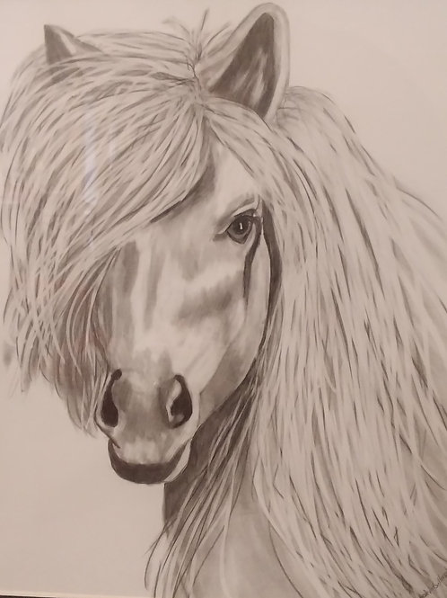 #77 White horse  11x14 framed pencil drawing
