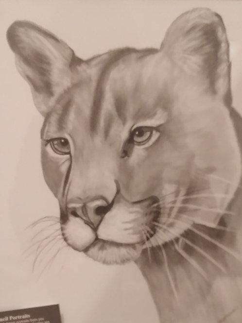 #47 pencil drawing
