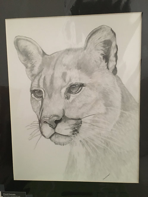 Cougar #26 16x20 framed pencil drawing