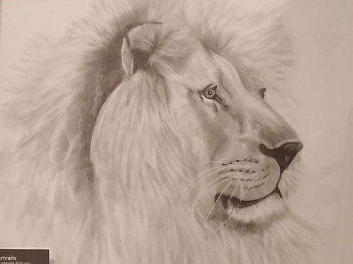 #116 Lion profile  11x14 framed pencil drawing