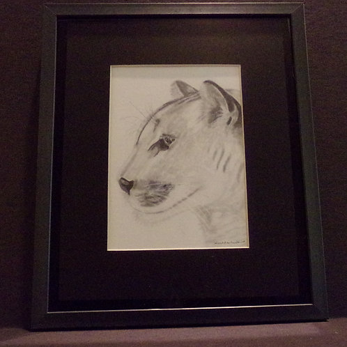 #204 Cougar 10x12 framed pencil drawing