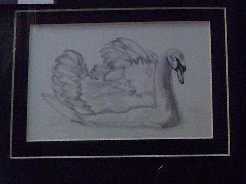 #118 pencil drawing