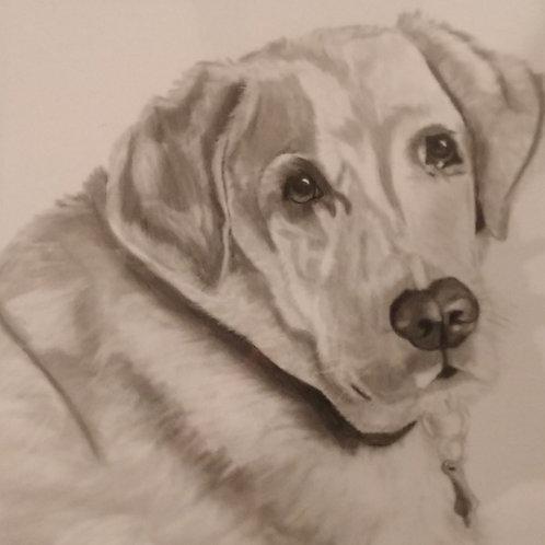 #172 pencil drawing