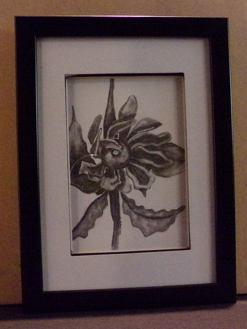 #125 daisey 5x7 framed pencil drawing
