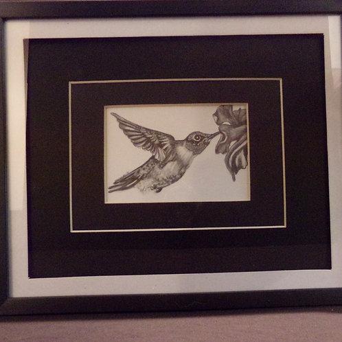 #15 Hummingbird 10x12 framed pencil drawing