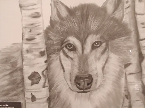 #54 pencil drawing