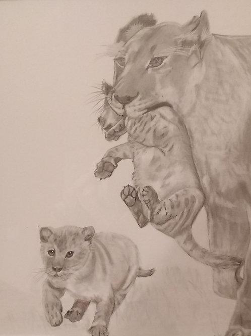 #225 Pencil drawing