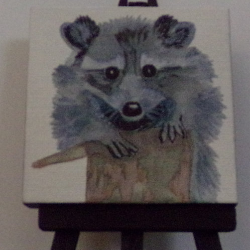 #209 racoon 3x3 inch with easel