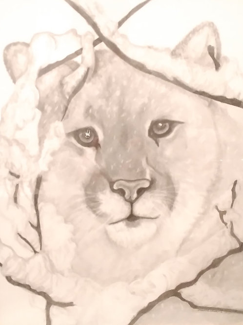 #17 Cougar in snow  16x20 pencil drawing