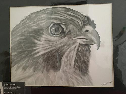 Hawk #72 11x14 framed pencil drawing