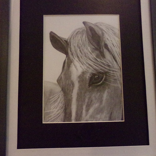 #61 Close up horse 10x12 framed pencil drawing