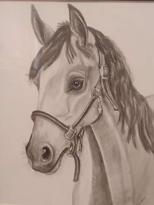 #58 Horse with halter  11x14 framed pencil drawing