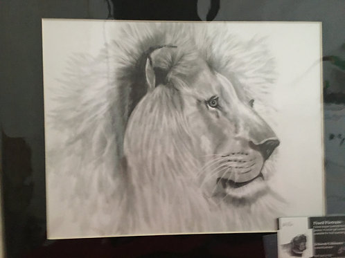 Lion profile #116 11x14 framed pencil drawing