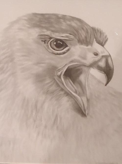 #138 Hawk  11x14 framed pencil drawing