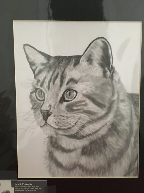 Cat #74 11x14 framed pencil drawing