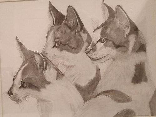#145  cats  16x20  pencil drawing