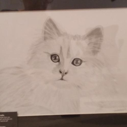 #46 pencil drawing