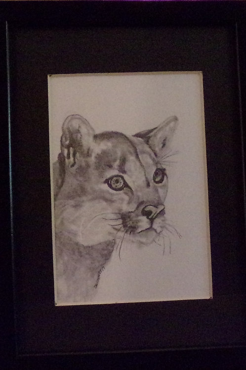 #12 cougar 5x7 framed pencil drawing
