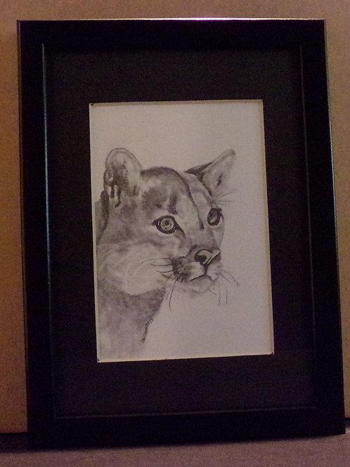 #12 cougar 5x7 framed pencil drawing