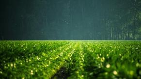 Nawozy azotowe, a cele klimatyczne