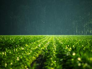 6 innovations agricoles pour répondre aux enjeux actuels et futurs