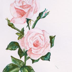 watercolour & acrylic