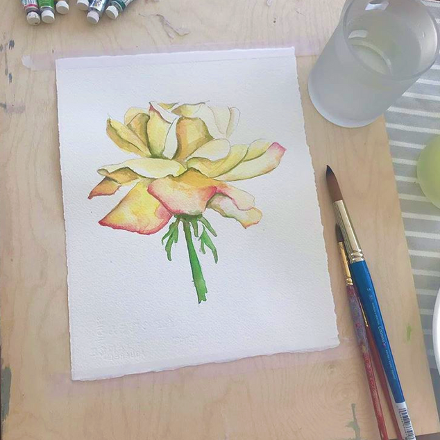 watercolour rose