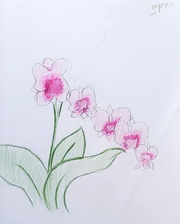 Nadia's Flowers