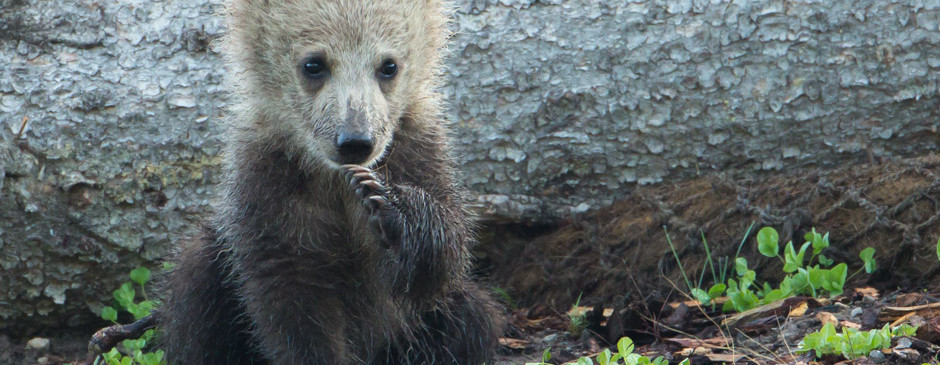 Grizzly Cub of the Year