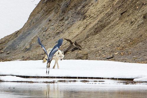 Blue Heron & Canyon Alpha Metal Print